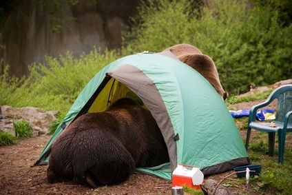 Scary Animals Bears in tent & travel stories | The Escapades